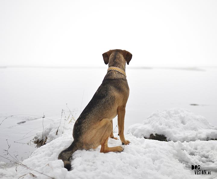 Voorbeeld van zacht licht | hondenfotografie blog | www.DOGvision.be