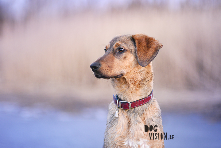 Rule of space | Dog photography tips & tricks | Oona, mixed breed dog | www.DOGvision.be