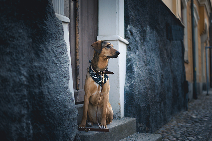 Tip to photography your dog in the city, creative dog photography, Sweden, www.DOGvision.eu