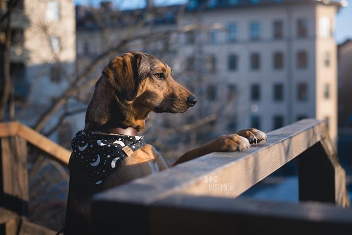 Hondenfotografie, Stockholm, Zweden, blog op www.DOGvision.be