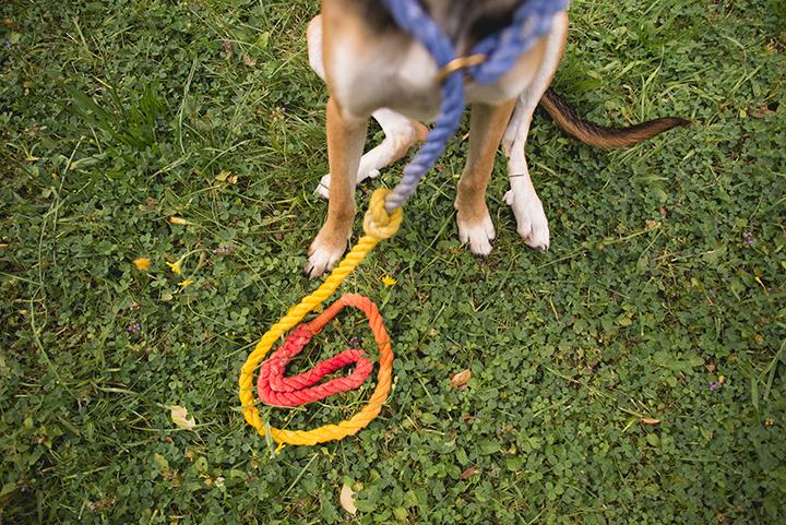 DIY, regenboog hondenleiband, honden DIY, hondenblog, hondenfotografie, www.DOGvision.be
