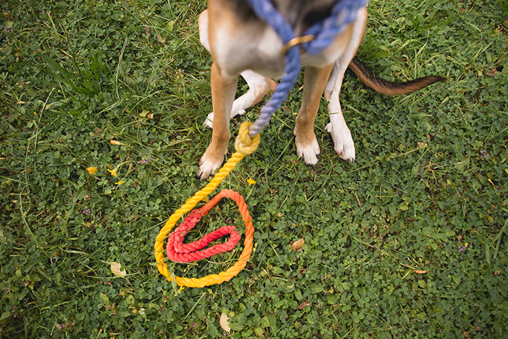 dog diy, rope leash, European dog photographer, petpreneur, www.DOGvision.eu