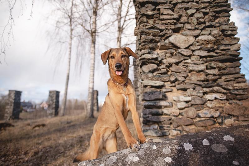 Exploring with dogs in Sweden, Flatenbergs hytta in Smedjebacken Dalarna, www.DOGvision.eu