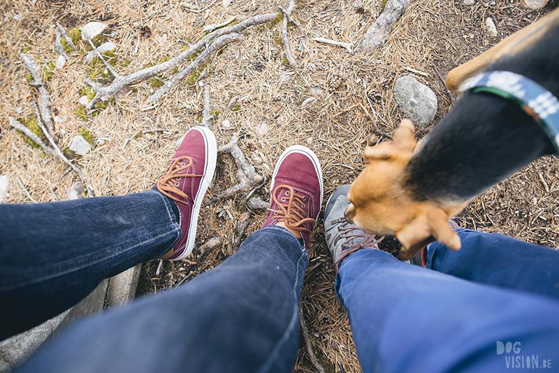 #TongueOutTuesday (23), hondenfotografie blog, honden blog, wandelen in Zweden, Dalarna, www.DOGvision.be