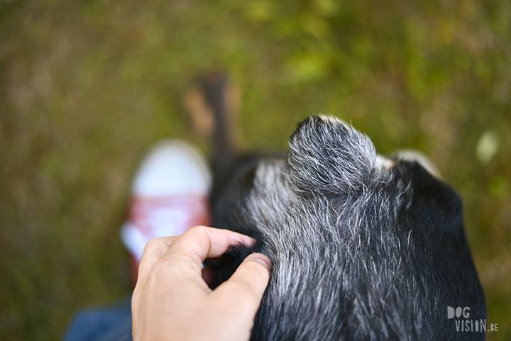 Zomer Zweden | hondenfotografie en blog | www.DOGvision.be