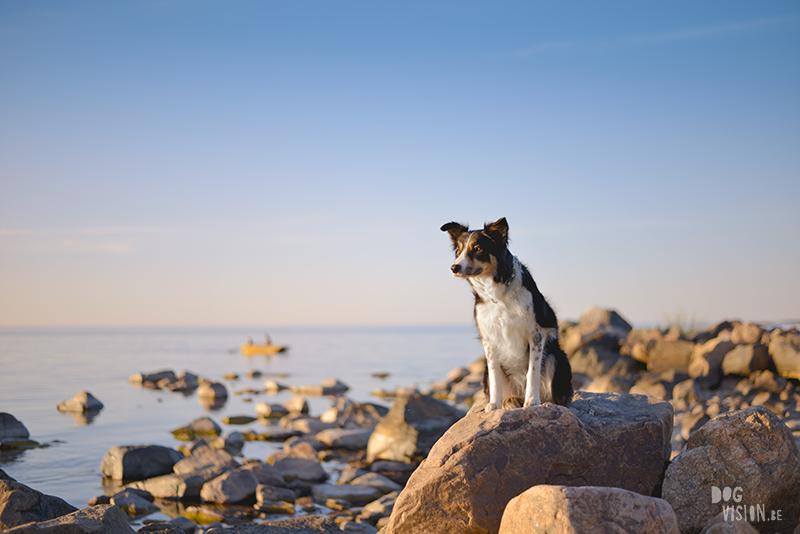 #tongueouttuesday, creative dog photography project, dog photographer Europe, hundfotograf Sverige, dog blog on www.DOGvision.eu
