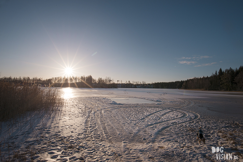 Frozen lake, High five, dog photography, rescue dog Sweden, hiking with dogs in Sweden, www.DOGvision.eu