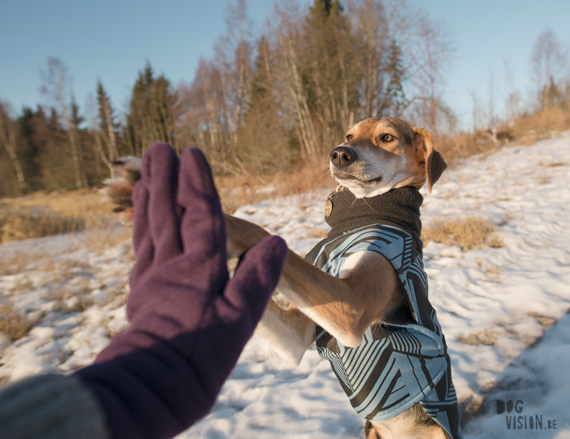 High five, dog photography, rescue dog Sweden, hiking with dogs in Sweden, www.DOGvision.eu