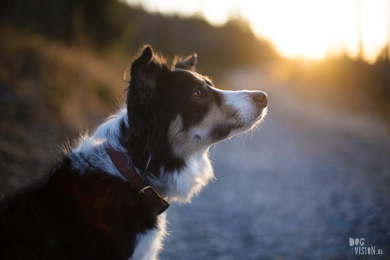 Honden in zweden, wandelen met honden in zweden, verhuizen naar Zweden met honden, hondenblog en hondenfotografie, www.DOGvision.be
