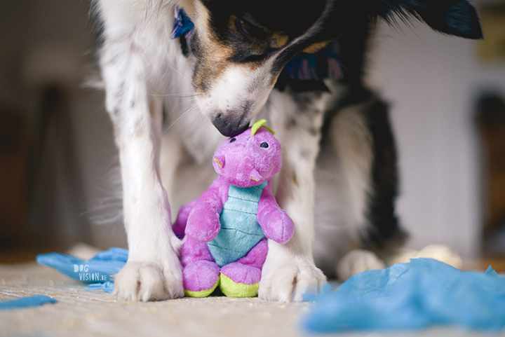 Gelukkige verjaardag Mogwai | Border collie | hondenfotografie | Zweden | www.DOGvision.be
