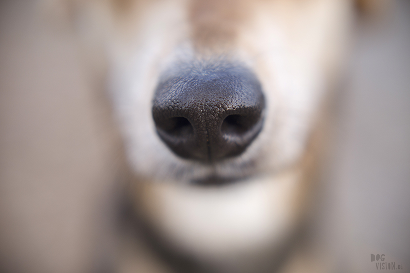 Dog photography DOGvision, dog nose, macro photography, www.DOGvision.eu