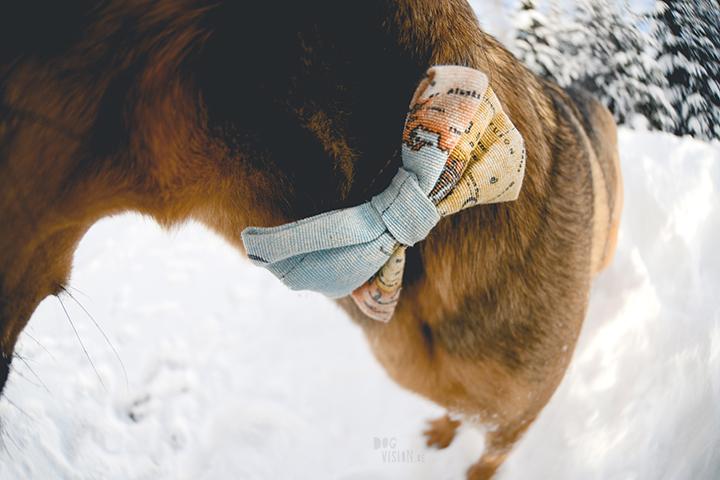 #TongueOutTuesday (07)| Blog over hondenfotografie, wonen in Zweden en avonturen met honden | www.DOGvision.be | Hondenfotografie