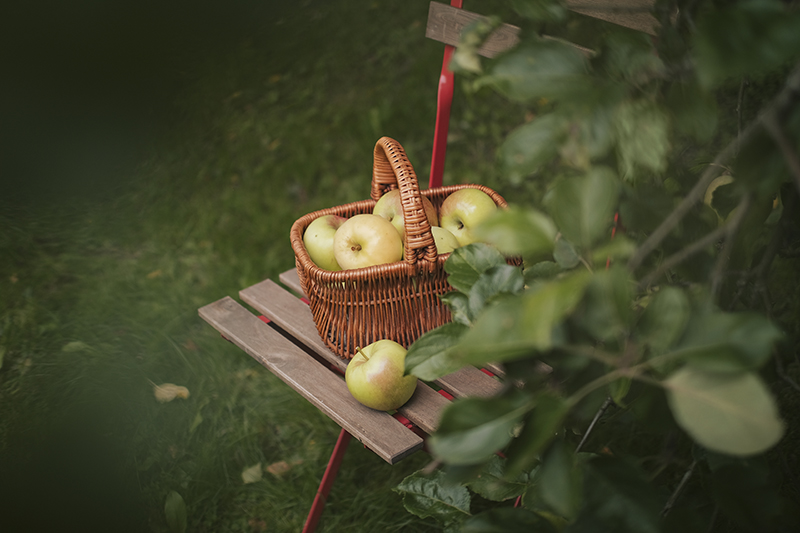 Apples and apple sauce from our garden, cabincore, cottagecore aesthetic, www.DOGvision.eu
