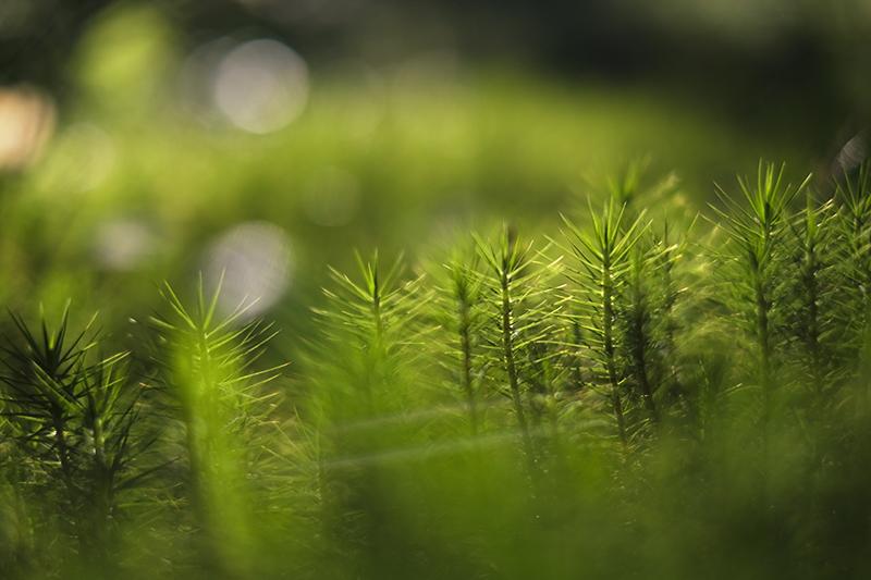 Lush forest Sweden, Dalarna, www.Fenne.be