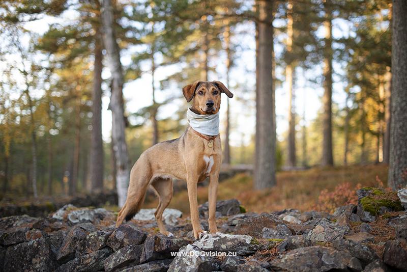 Fenne Kustermans hondenfotografie Zweden, www.DOGvision.be