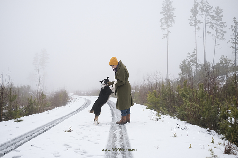 4 years in Sweden, Belgian in Sweden, dog photography, Fenne Kustermans, www.DOGvision.eu