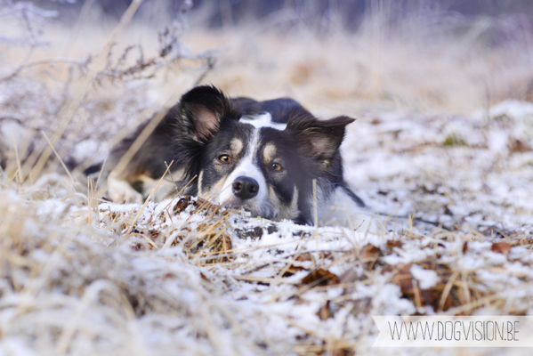 Winter walk | www.DOGvision.be | dog photography