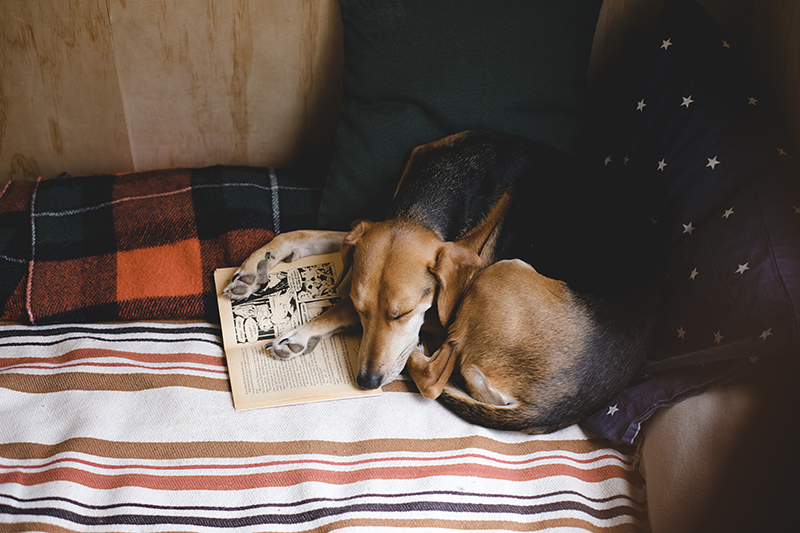 Dreaming of heroes, the start of a journey. Dog blog, dog photography, www.DOGvision.eu
