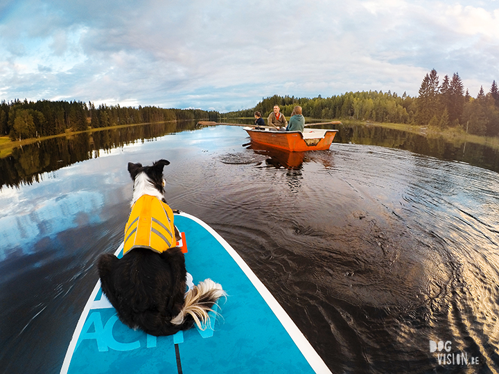 Red paddle co | dog sup | Border Collie | Gopro shot | lake life Sweden | www.DOGvision.be