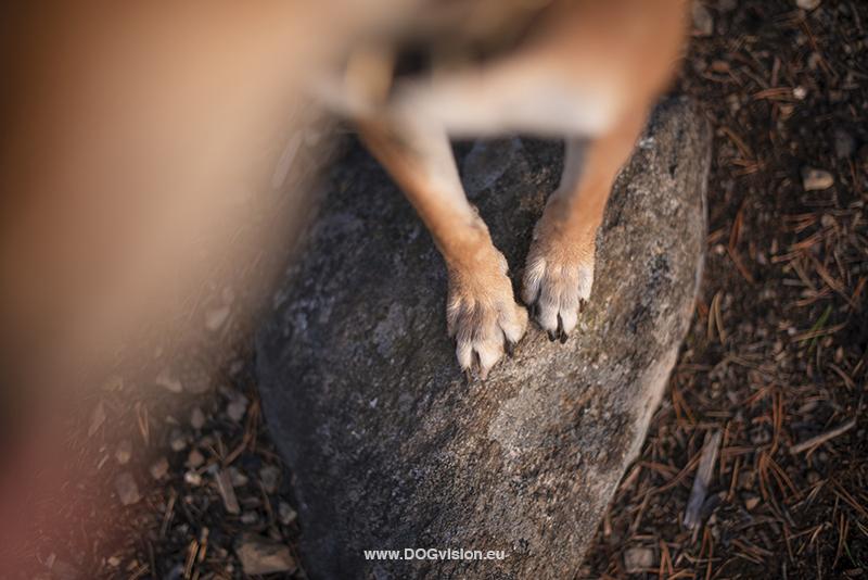 #TongueOutTuesday (38), Fenne Kustermans, hondenfotografie Zweden, Dalarna, wandelen met honden, honden fotograferen in de natuur, www.DOGvision.be