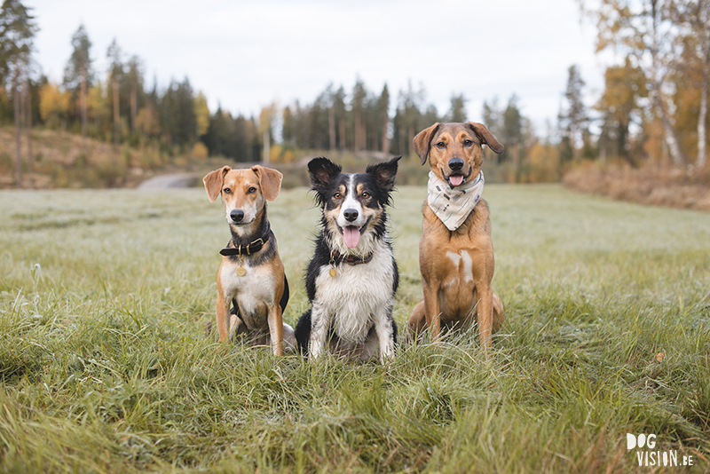 #TongueOutTuesday (42), www.DOGvision.eu