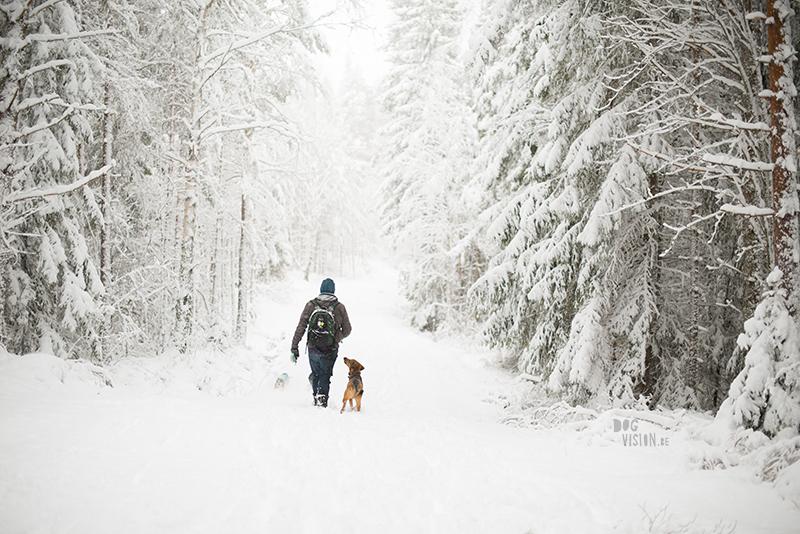 Winter in Zweden, hondenfotografie, honden in Zweden, wandelen Zweden, www.DOGvision.be