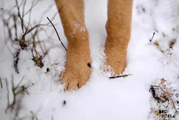 Paws in the snow | www.DOGvision.be