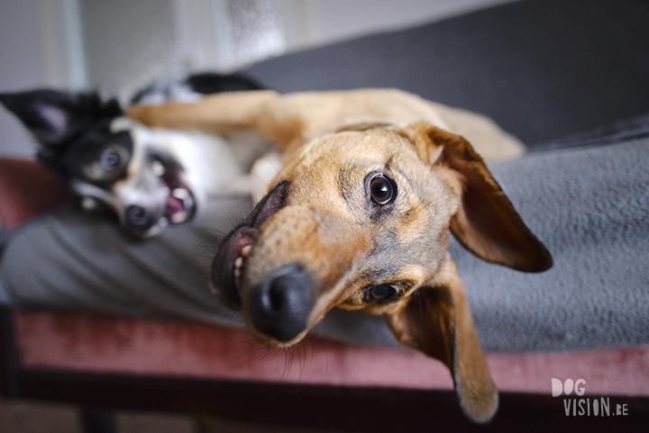 Indoor hondenfotografie tips | Oona mutt | www.DOGvision.be