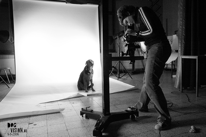 Throwback Thursday | dog photography | DOGvision.be