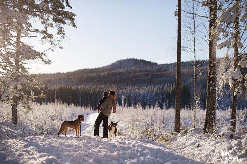 hondenfotografie, hondenfotograaf, wandelen met honden in Zweden, sneeuwplezier met honden, Dalarna, www.DOGvision.be