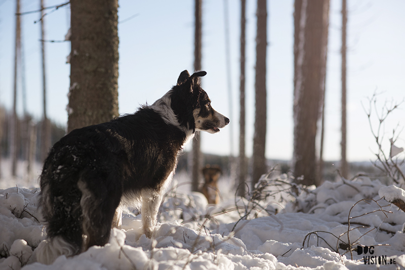 #TongueOutTuesday (03), weekly dog blog, adventure dogs, hiking with dogs in Europe, Sweden, Border Collie, Dog photographer, www.DOGvision.eu