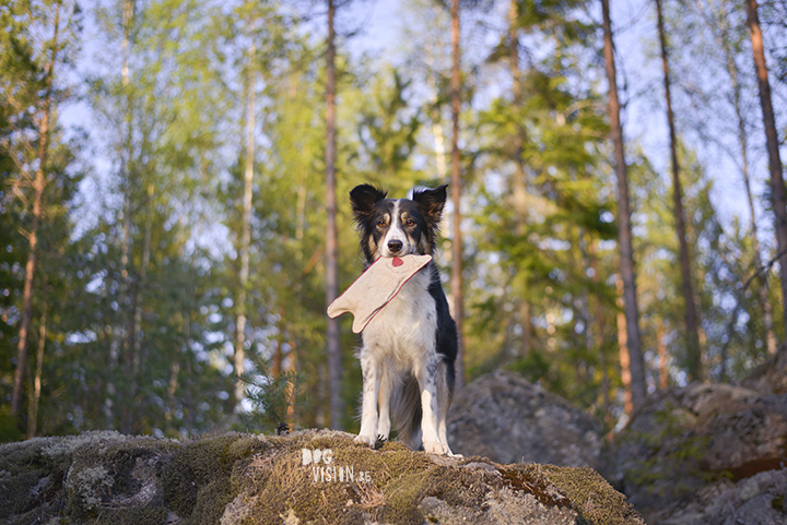 #TongueOutTuesday (20), hondenfotografie, honden in Zweden, fotografie project, www.DOGvision.be