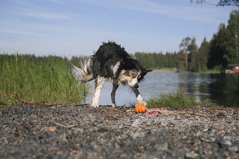 dog photography, swimming with dogs, dog adventure story, dogs in Sweden, www.DOGvision.eu