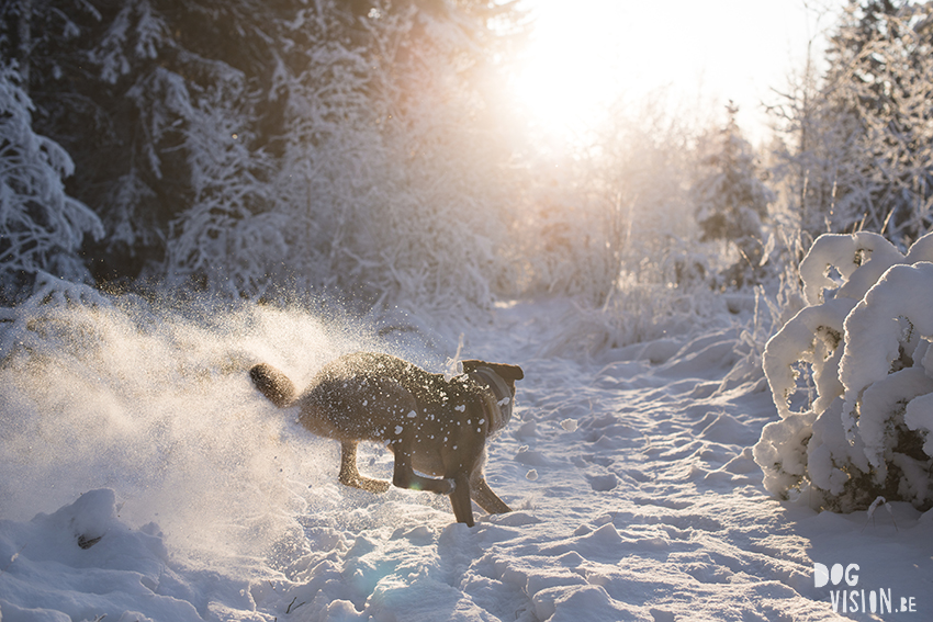 Dogvision, winter dog photography tips and tricks on the blog, www.DOGvision.eu, protecting photography gear in winter.