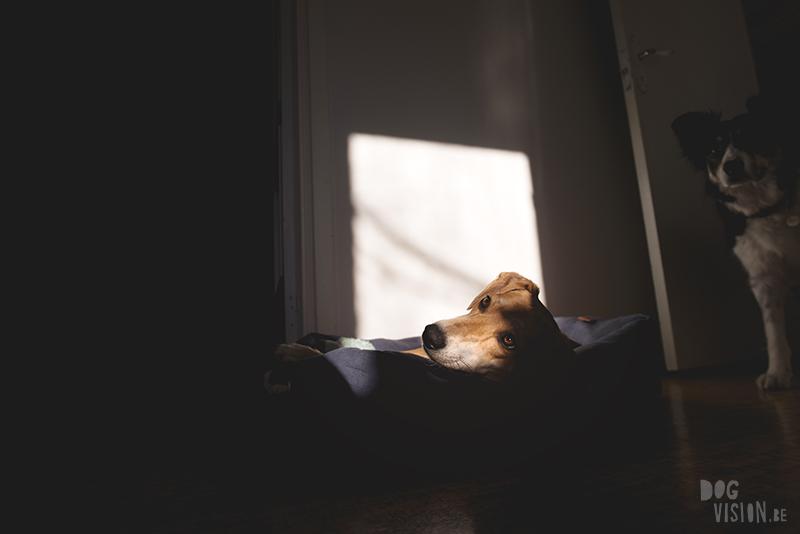 honden in Zweden, scandinavie, hondenfotgrafie, hondenfotograaf, www.dogvision.be