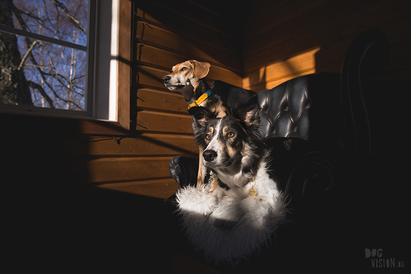 landleven, cabin hond, hondenfotografie Zweden, hondenfotograaf, hondenblog, www.dogvision.be