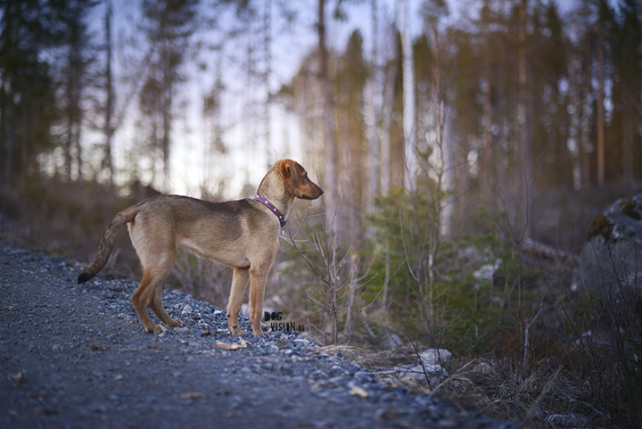 Oona, mutt, muttpuppy, hiking, adventure dog | www.DOGvision.be | dog photograhy
