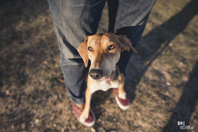 Hondenblog, Border Collie, straathond Bosnië, straathond Kreta, hondenfotograaf, hondenfotografie, Zweden, www.DOGvision.be