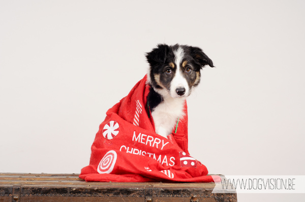 Happy Holidays! | www.DOGvision.be