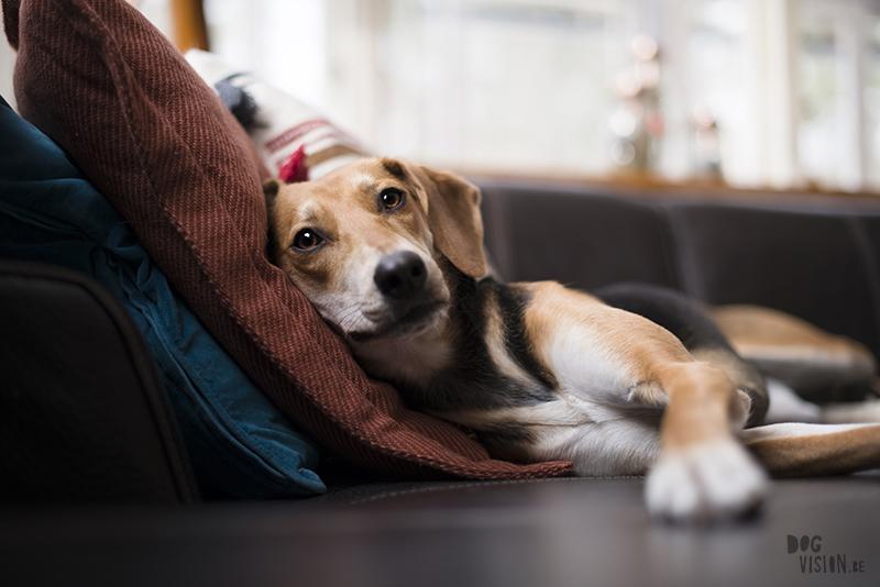 hondenfotografie Zweden, wandelen in Zweden, honden blog, www.DOGvision.be