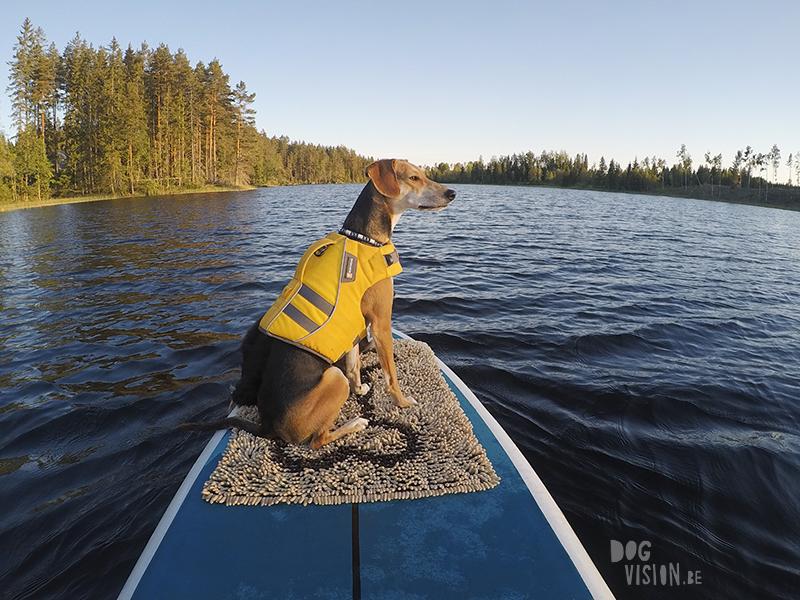 #TongueOutTuesday (25), Fenne Kustermans hondenfotografie Zweden, Dalarna, wandelen met honden in Zweden, www.DOGvision.be