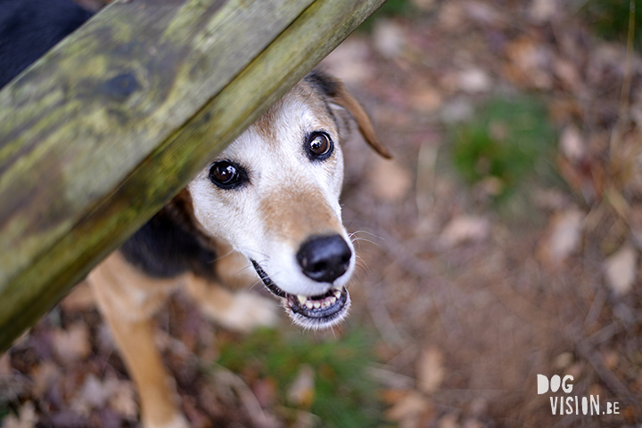 December walk | www.DOGviion.be | dog photography