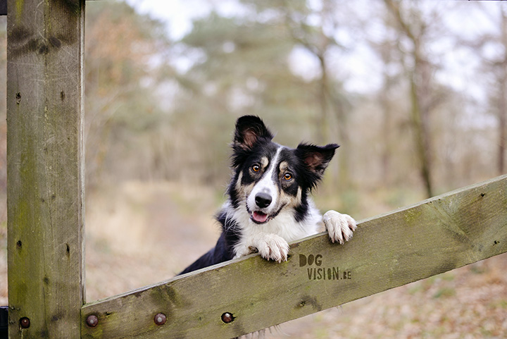 December walk | www.DOGviion.be | dog photography | Border Collie