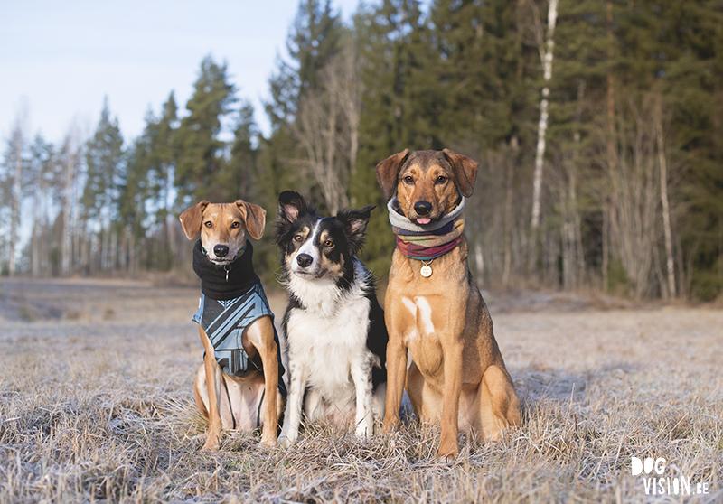 #TongueOutTuesday (04), dog photography Europe Sweden, dogs in Sweden, dog photography project, www.DOGvision.eu