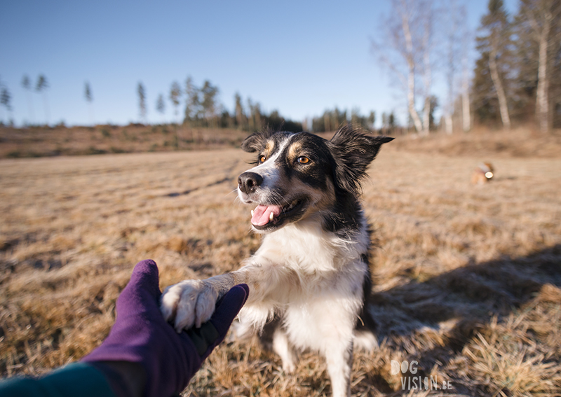 #TongueOutTuesday (06), DOGvision dog photography project, hondenfotografie Zweden, Dalarna, Fenne Kustermans, www.DOGvision.be