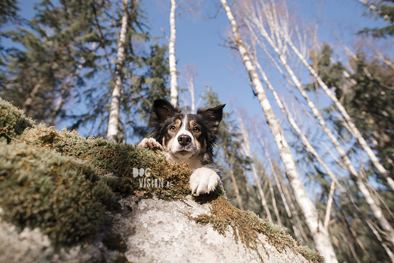 #TongueOutTuesday (07), hondenfotografie, honden in Zweden, wandelen met honden in Zweden, dog photography, dog photography Sweden, Border Collie in Sweden, hiking with dogs europe, www.DOGvision.eu