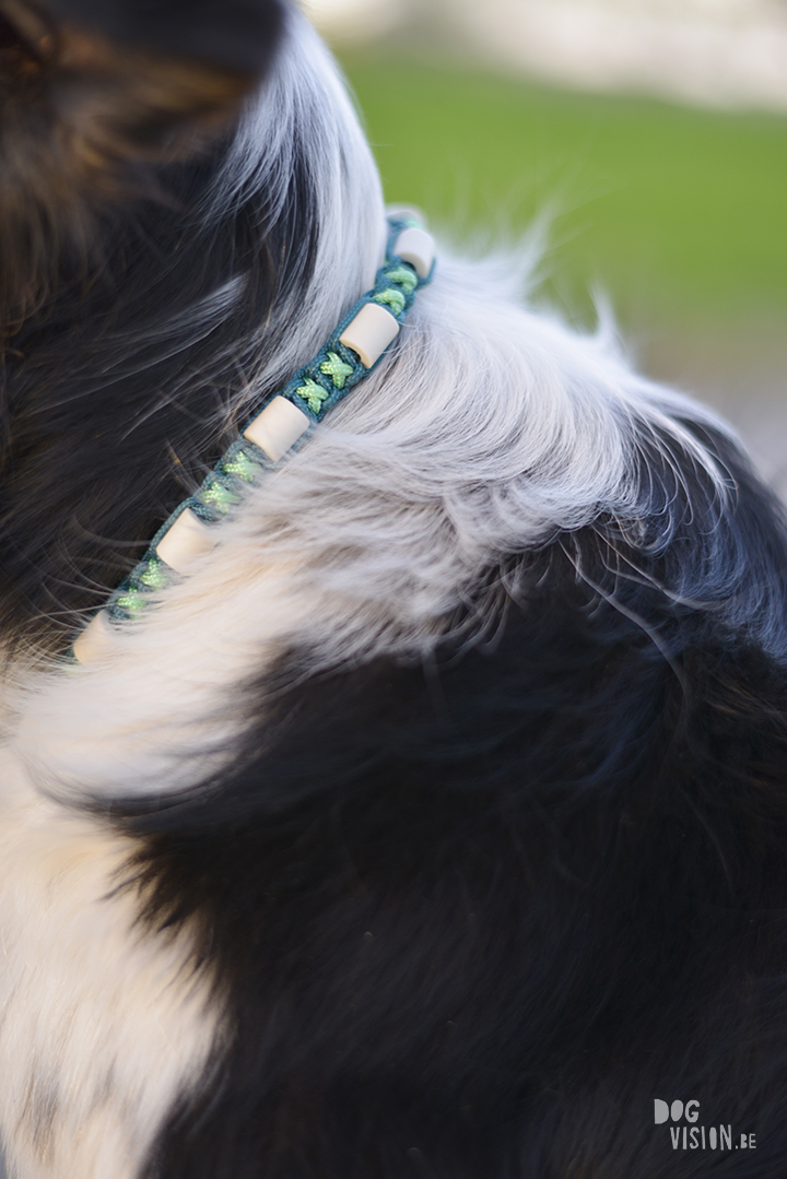 Tick repellents dog collar, EM ceramics, DIY project for dogs, dog photography, blog on www.DOGvision.eu