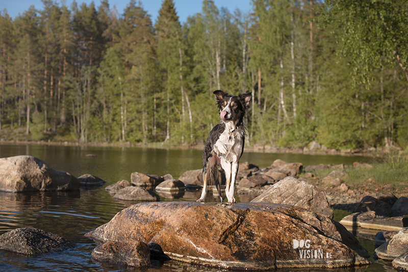 #TongueOutTuesday (25), dog blog Fenne Kustermans Dalarna Sweden, hiking with dogs, summer in Sweden, www.DOGvision.eu