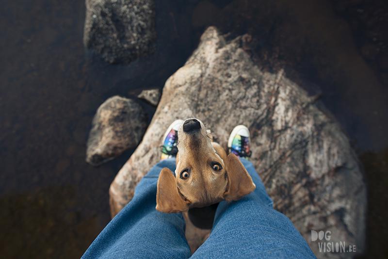 Fenne Kustermans hondenfotografie in Dalarna Zweden, wandelen en kamperen met honden in Zweden, regenboog sneakers Converse, rescue dog, www.DOGvision.be
