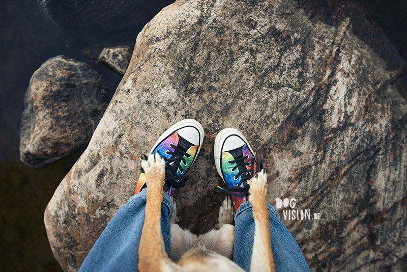 DOGvision.eu dog photography, Fenne Kustermans artist, dog photography in Sweden, Dalarna nature and hiking with dogs, Converse rainbow shoes. wwww.DOGvision.eu